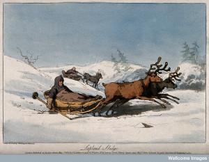 Image of reindeer pulling children in sledges